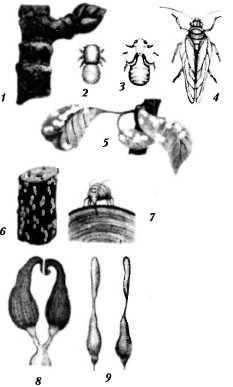 bolezni-i-lechenie-pchel-16.jpg