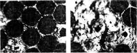 bolezni-i-lechenie-pchel-20.jpg