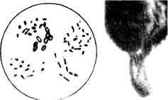 bolezni-i-lechenie-pchel-23.jpg