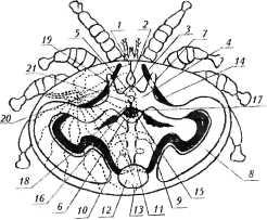 bolezni-i-lechenie-pchel-28.jpg