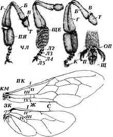 bolezni-i-lechenie-pchel-3.jpg