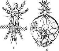 bolezni-i-lechenie-pchel-31.jpg