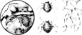 bolezni-i-lechenie-pchel-33.jpg