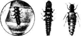 bolezni-i-lechenie-pchel-35.jpg