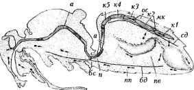 bolezni-i-lechenie-pchel-4.jpg