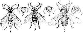 bolezni-i-lechenie-pchel-40.jpg